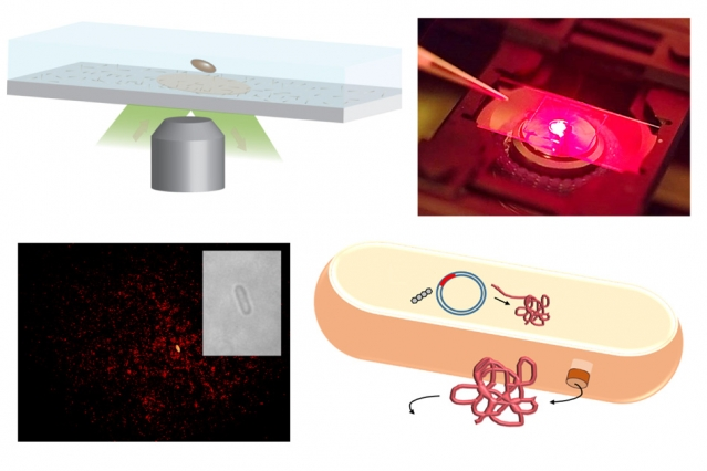 New sensors can detect single protein molecules
