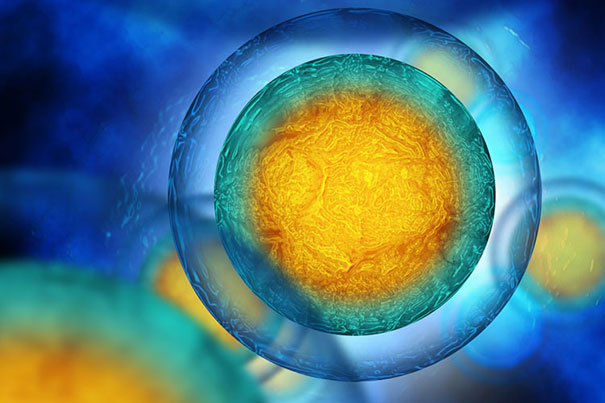 Critical step found in DNA repair, cellular aging