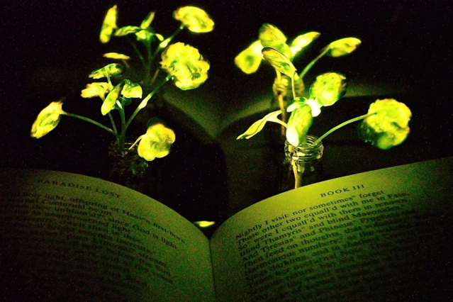 MIT Engineers create Nanobionic Light-Emitting Plants that can glow like a lamp